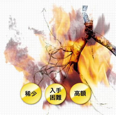 สารสกัดจากโสม Panax Ginseng