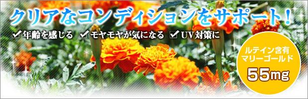 อาหารเสริม-dhc-Lutein-ลูทีน-วิตามิน-ตา-วิตามิน-สายตา-6