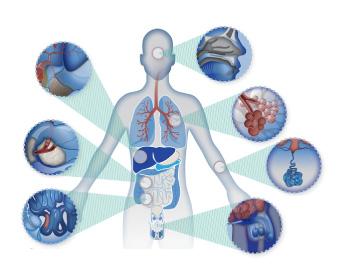 อาหารเสริมโกรทฮอร์โมนบำรุงเซลล์